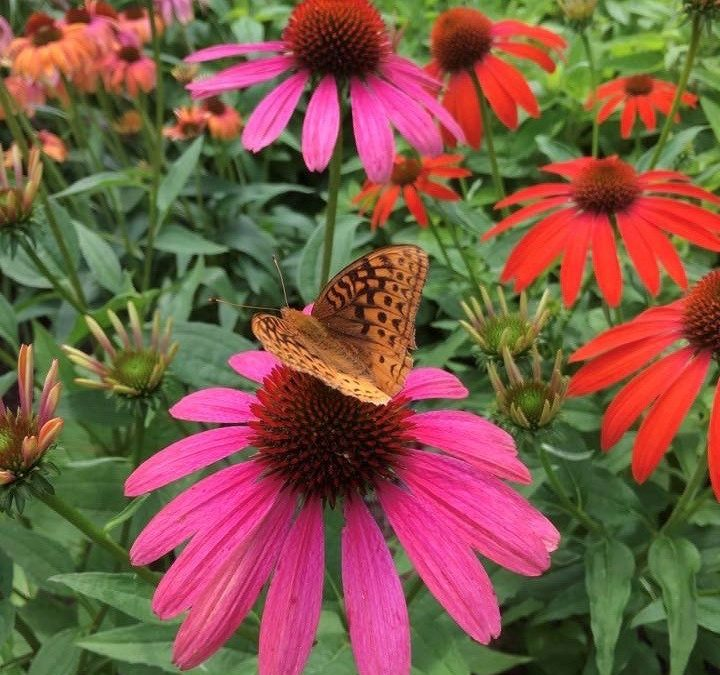 Recipe for Adding Native Plants to Any Garden