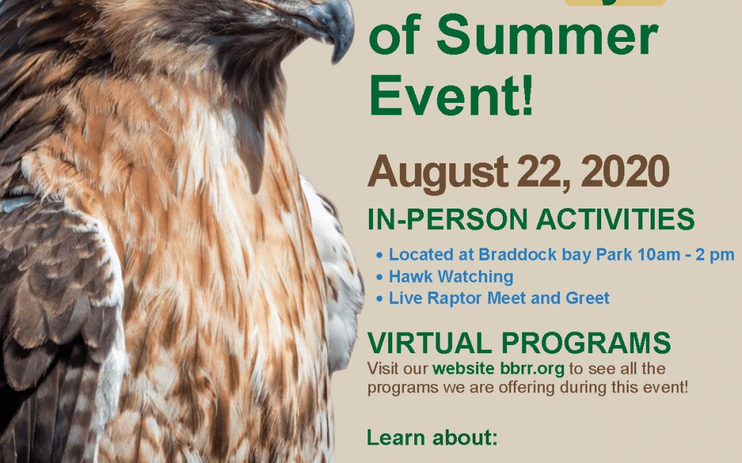 Hawk Days of Summer!