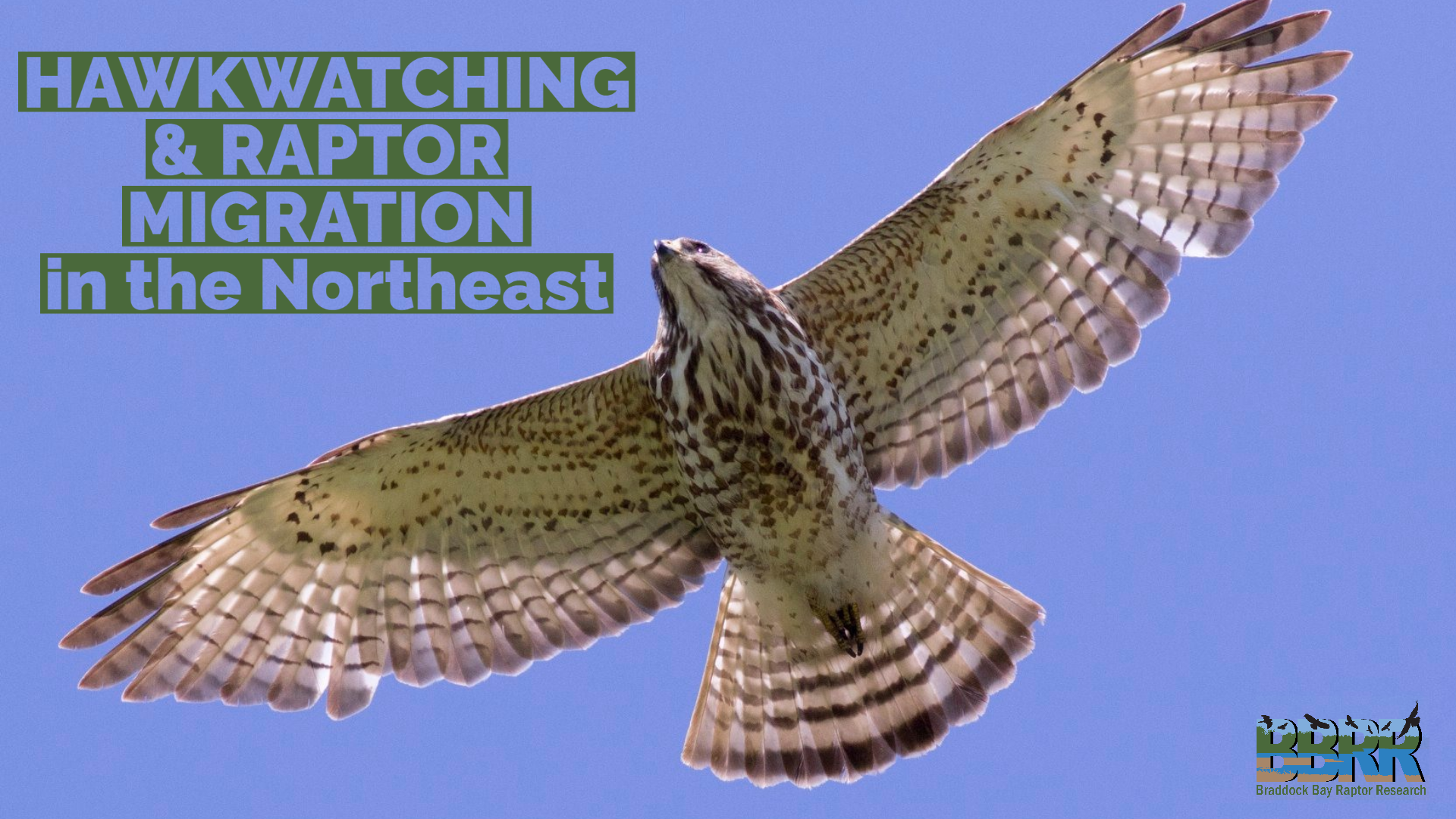 Hawkwatching and Migration in the NE