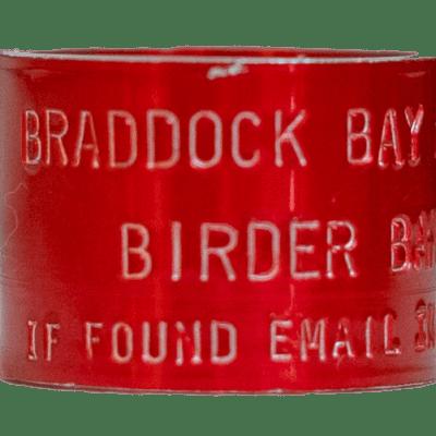 Birder Band Front