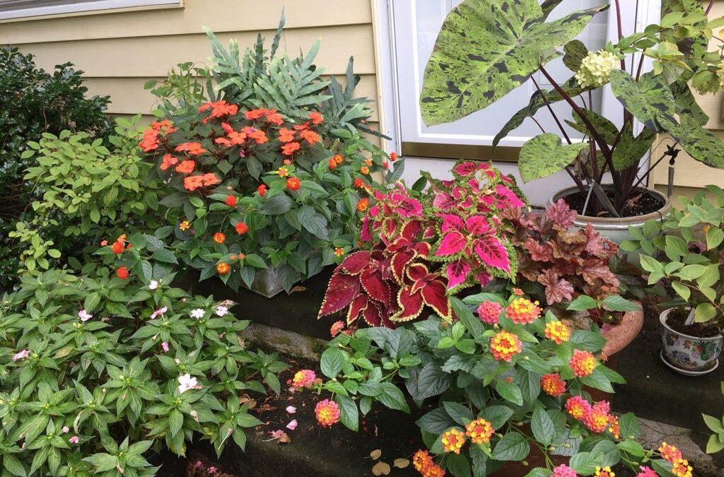 Native Wildflower Container Garden Class